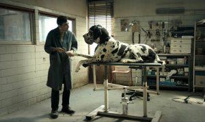 L'actor Marcello Fonte atenent un dels gossos del seus clients, a Dogman