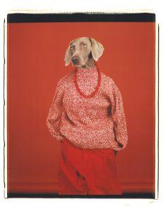 WILLIAM WEGMAN | La gossa Candy, fotografiada amb el títol <em>Casual</em> el 2002 i que és la imatge dels Rencontres d'Arles 2018 (Sperone Westwater Gallery)